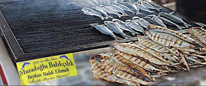 Beykoz'da yüz dolar bozdurana balık ekmek bedava
