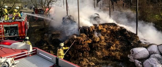Beykoz'da samanlık yangını