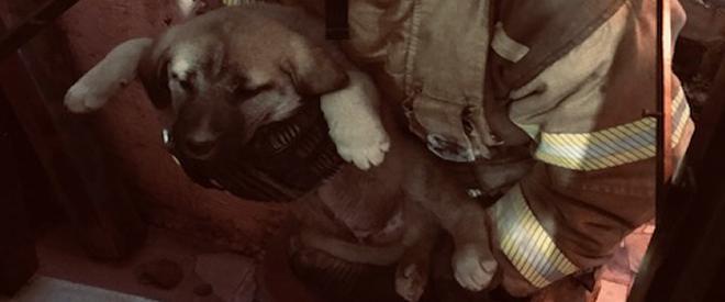 Beykoz'da mahsur kalan yavru köpek kurtarıldı